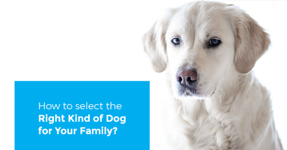How-to-select-the-right-kind-of-dog-for-your-family