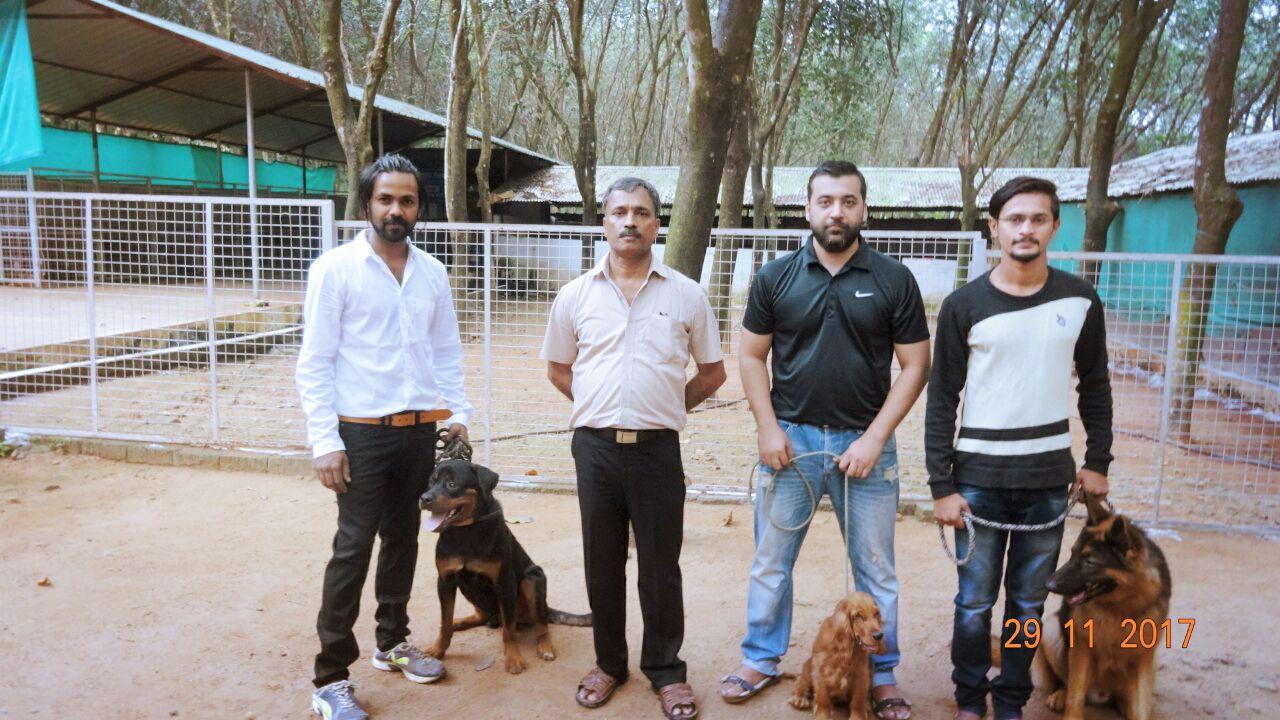 Dog Training Institute In Kerala Canine Training Center Dog School